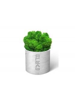 Мох Ягель натуральный, стабилизированный, зелёный